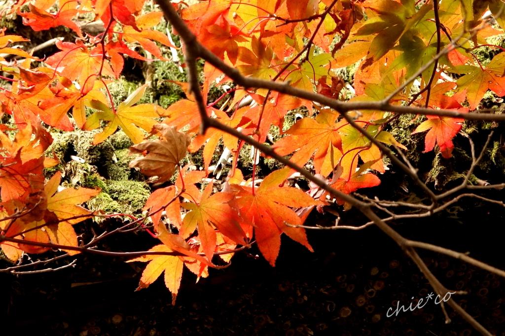 箱根美術館庭園-226