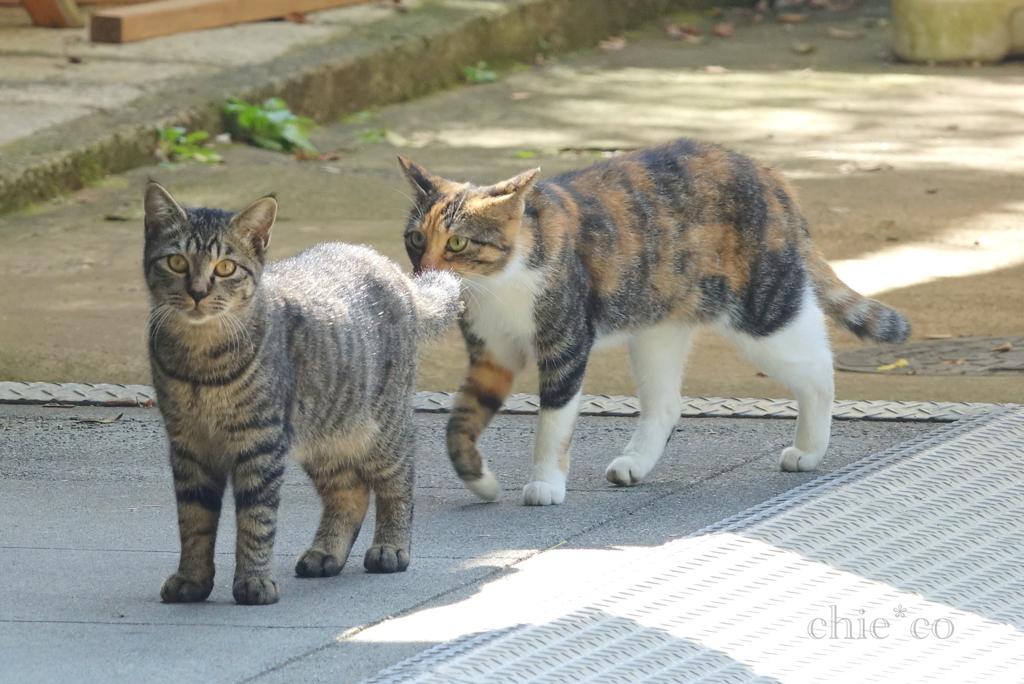 猫たち。。-007