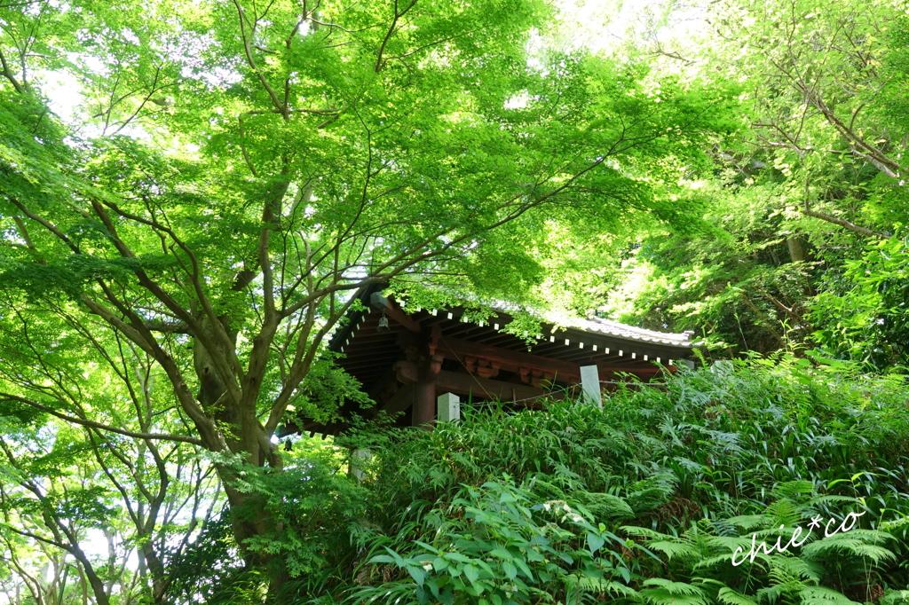 鎌倉-105