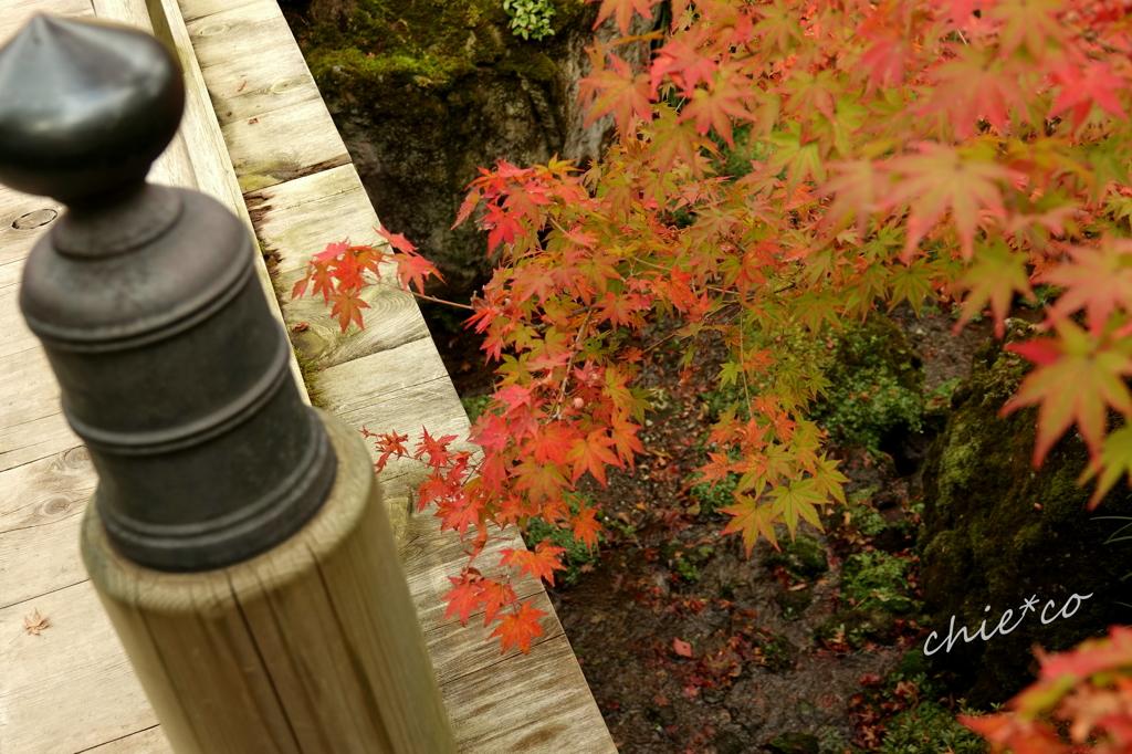 箱根美術館庭園-178