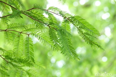 緑の羽根。。