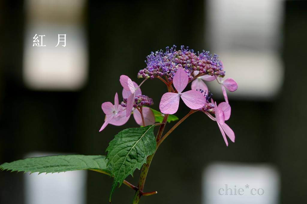 瀬戸神社-245