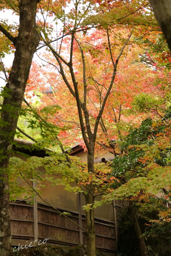 箱根美術館庭園-185