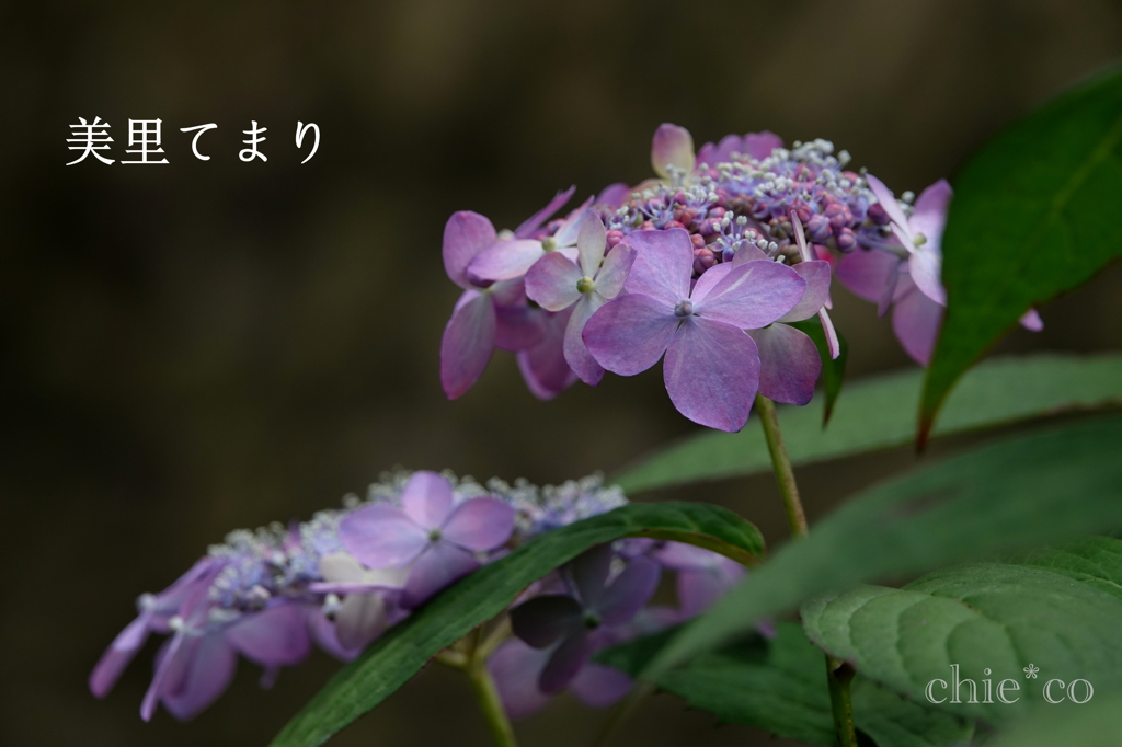 瀬戸神社-244