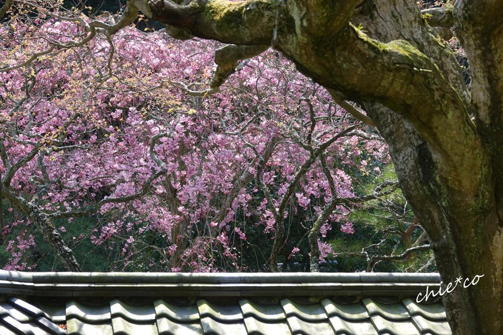 鎌倉-448
