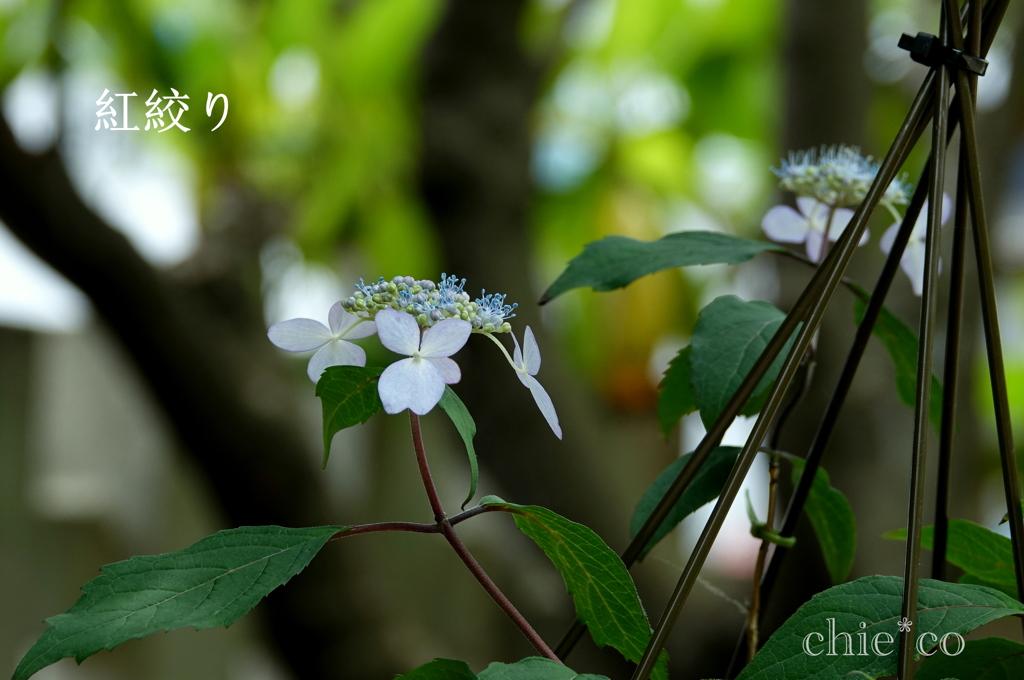 瀬戸神社-266