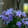 瀬戸神社-263