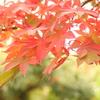 箱根美術館庭園-198