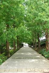 山手イタリア山庭園-266