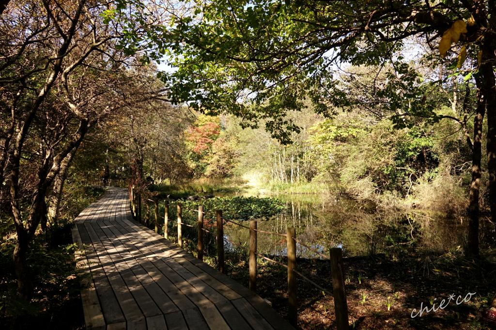 箱根湿生花園-222