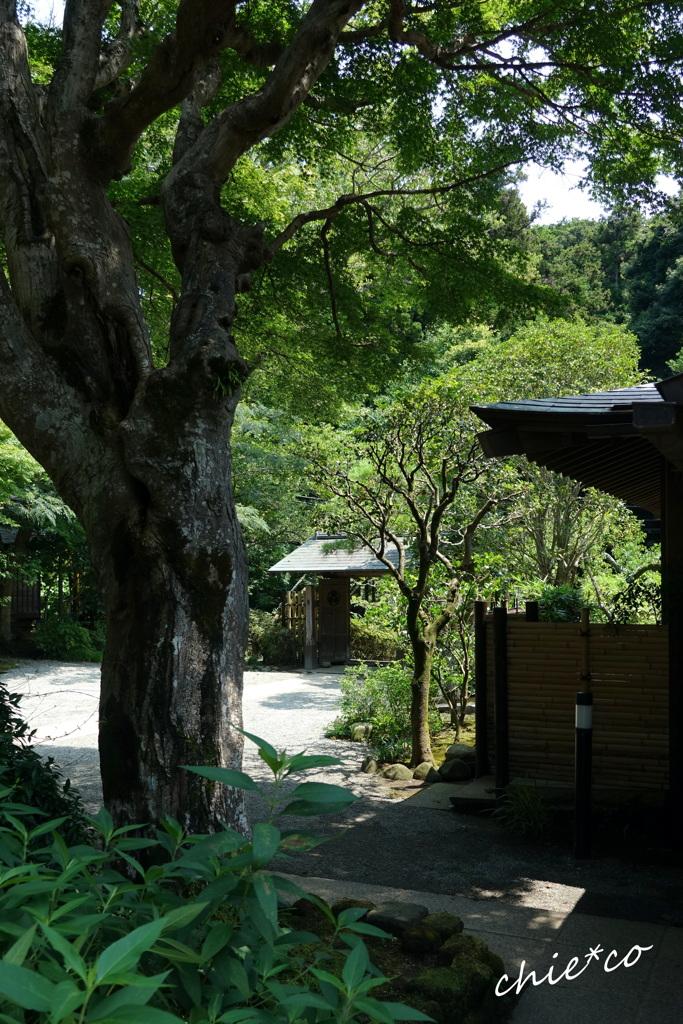 鎌倉-639