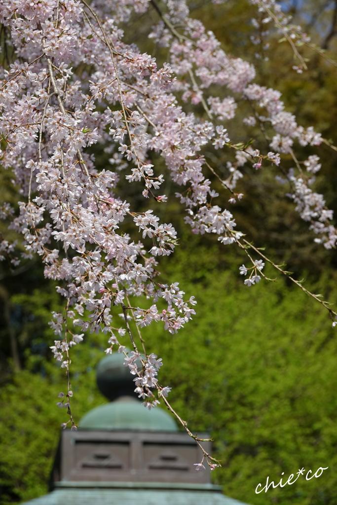鎌倉-446