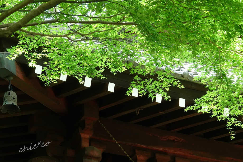 鎌倉-106