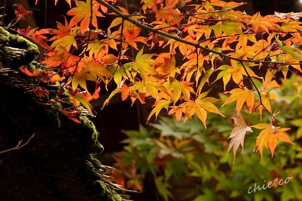 箱根美術館庭園-188