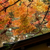 岡田美術館庭園-073