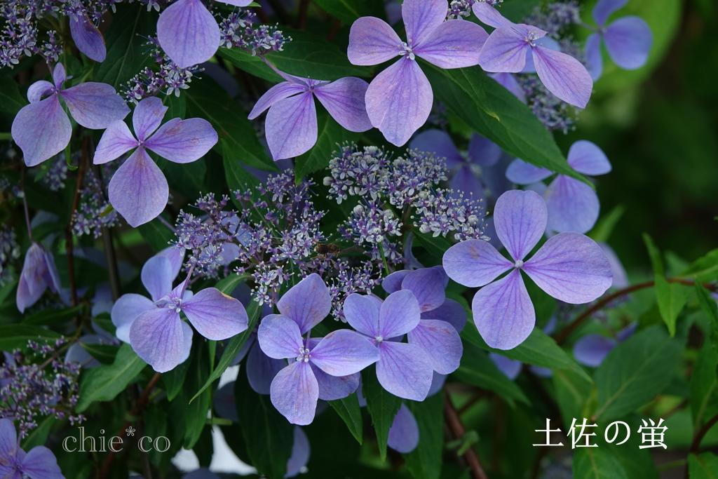 瀬戸神社-261
