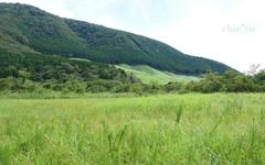 緑の湿原。。1