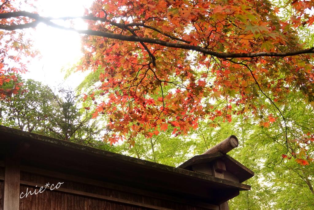 箱根美術館庭園-211