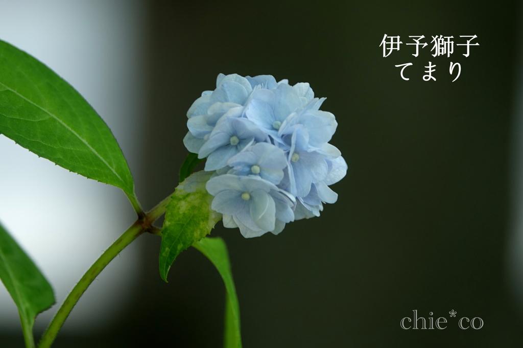 瀬戸神社-270