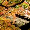 箱根美術館庭園-212