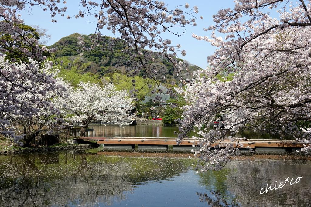 鎌倉-528