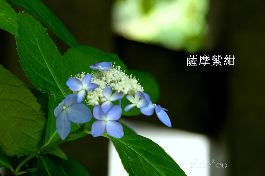 瀬戸神社-273