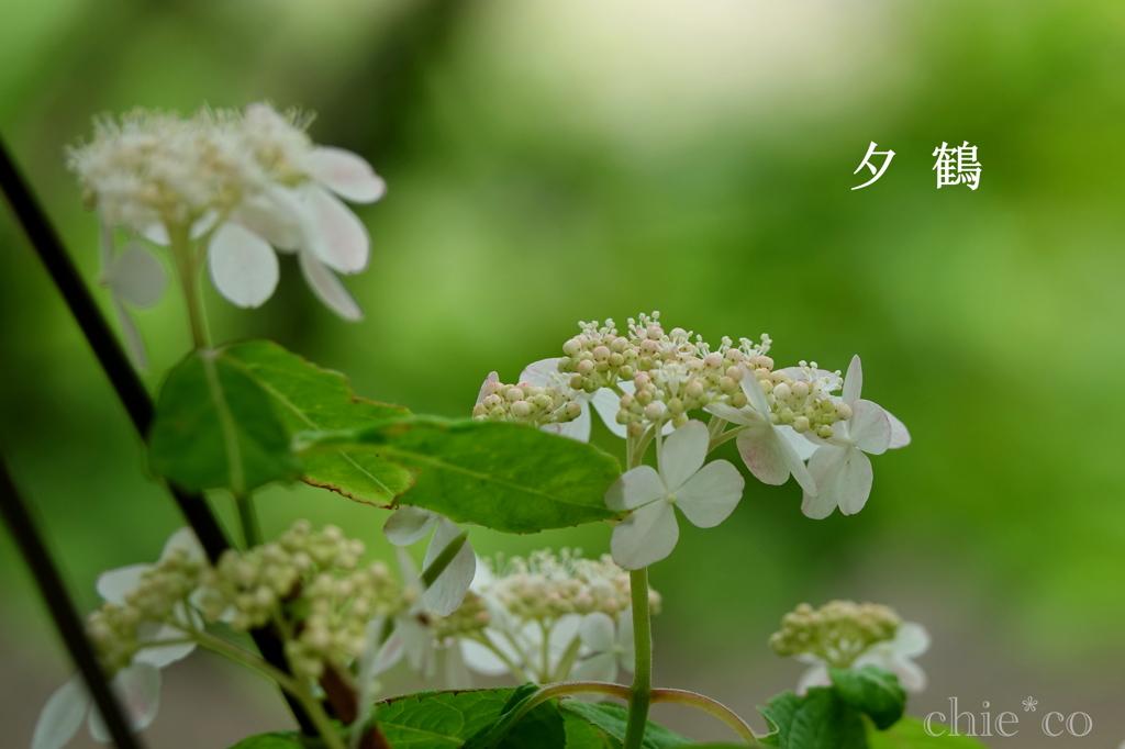 瀬戸神社-234