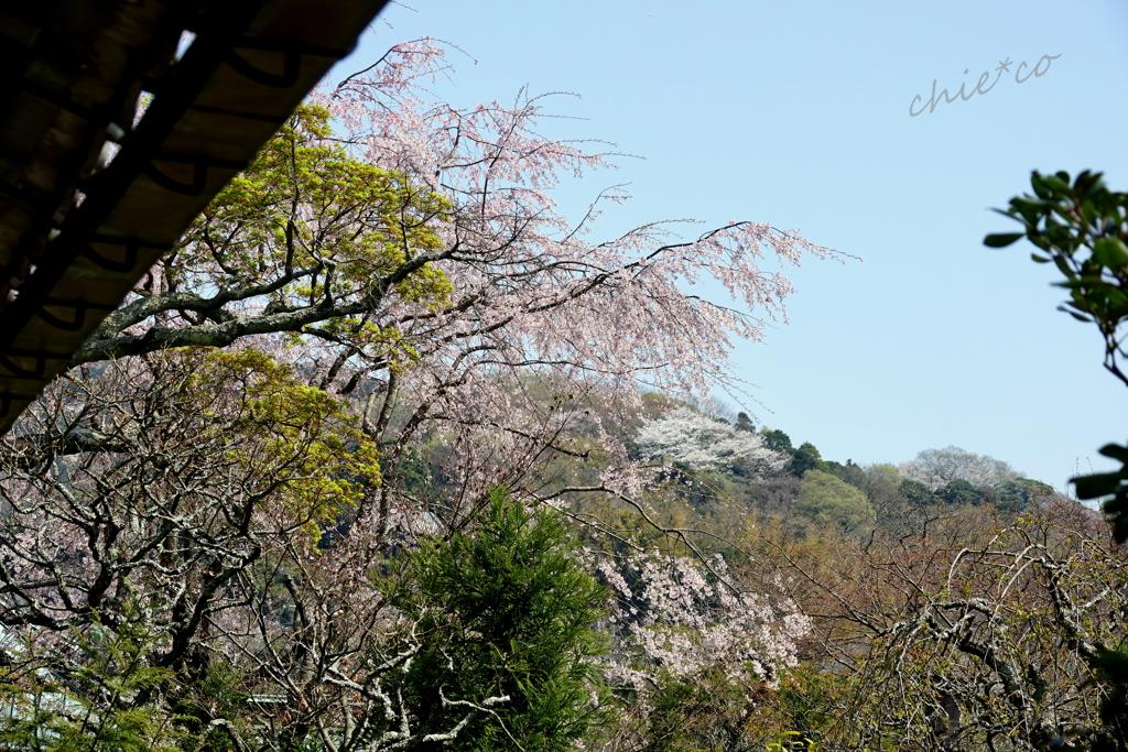 鎌倉-467