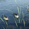 鴨のいる池。。