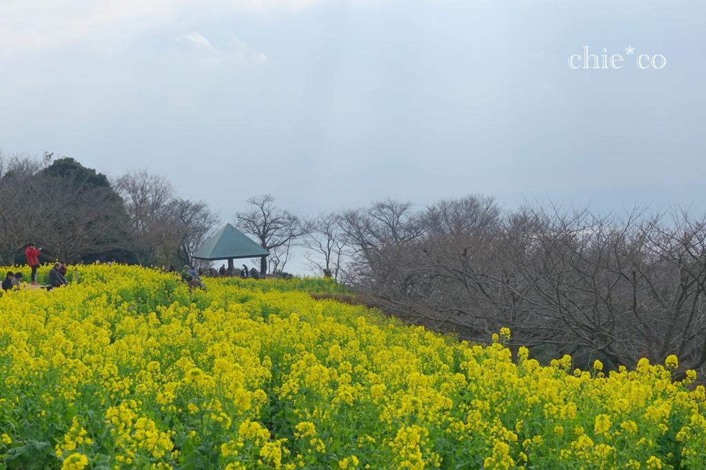 吾妻山公園-194