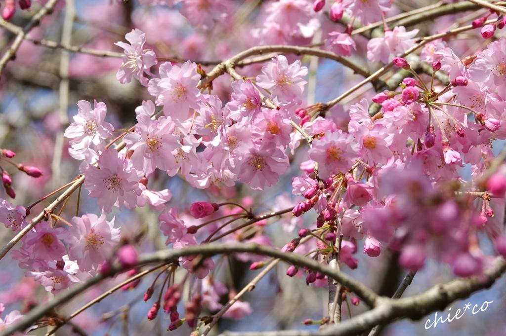 鎌倉-476