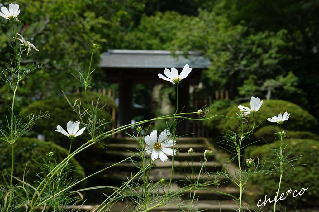 鎌倉-628