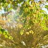 里山ガーデン-240