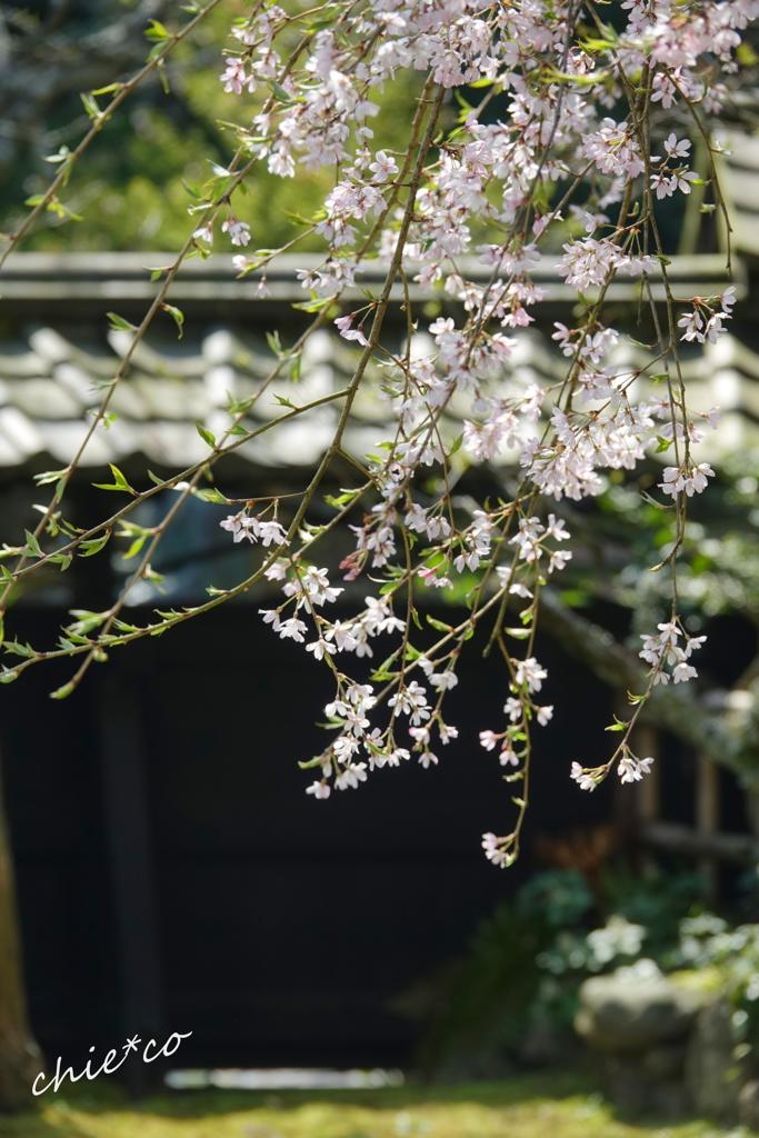 鎌倉-447