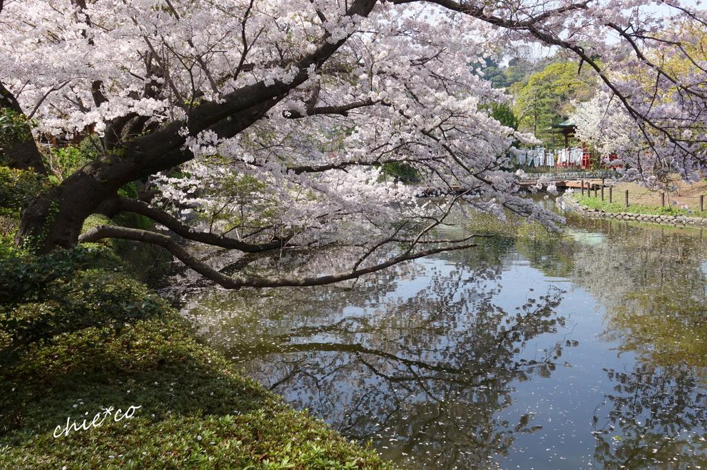 鎌倉-529