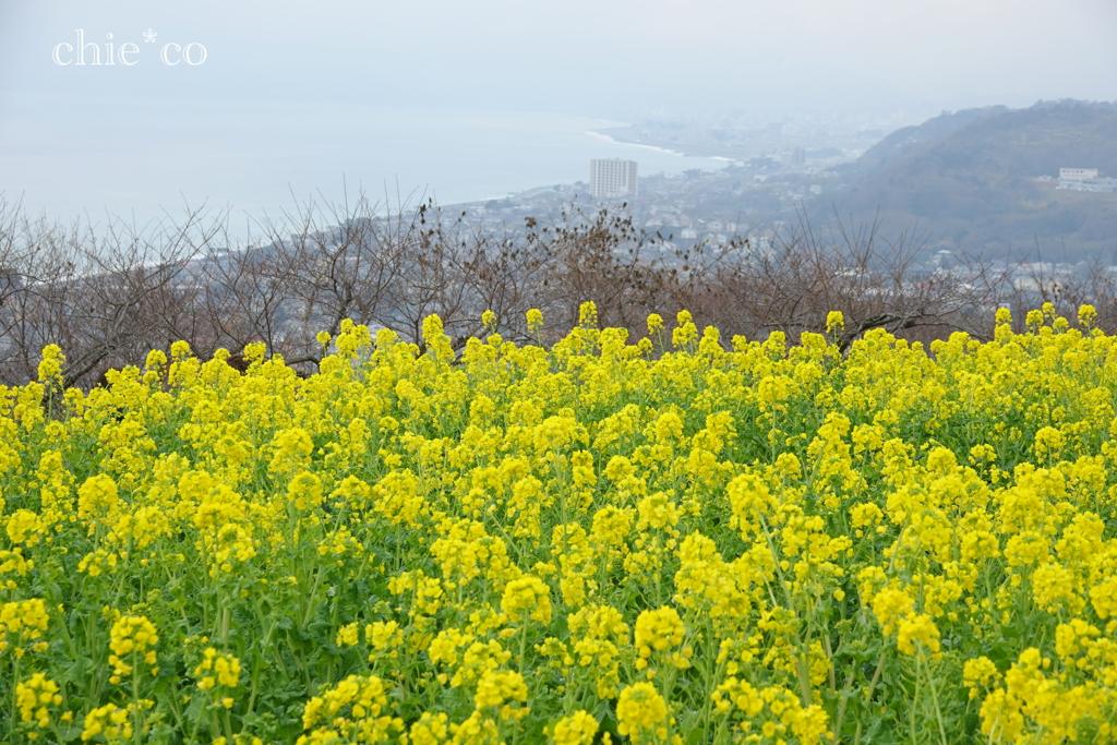 吾妻山公園-191