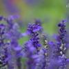 山手イタリア山庭園-318