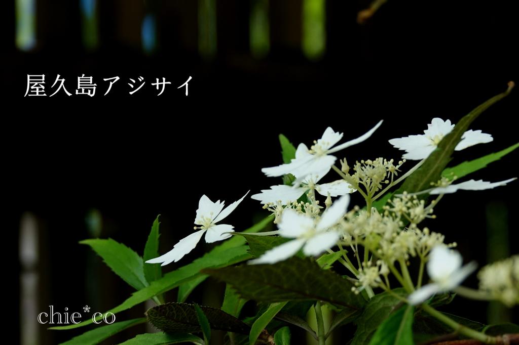 瀬戸神社-231