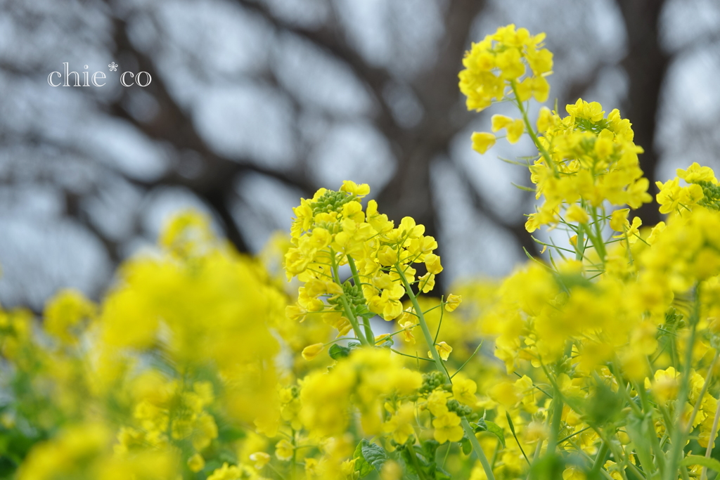 吾妻山公園-176