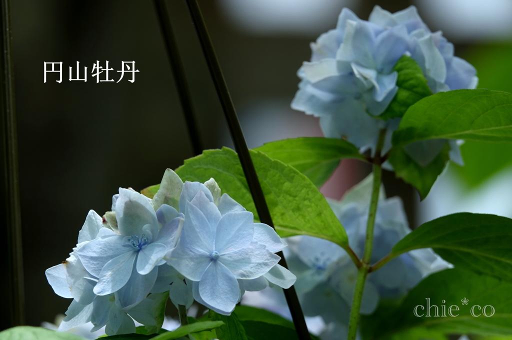 瀬戸神社-264
