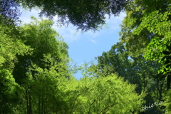 北鎌倉-369