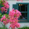山手イタリア山庭園-270
