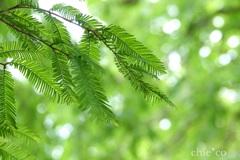 緑の羽根。。2