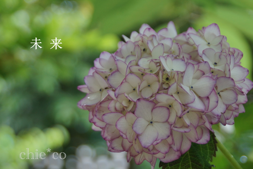 瀬戸神社~山あじさい-476