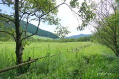 緑の湿原。。2
