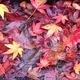 嵐が呼んだ早い秋