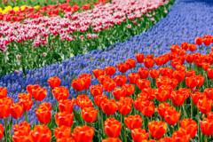チューリップと花の川