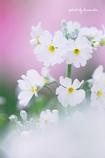 春が来た(^^♪