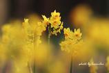 春への思い