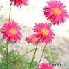 可憐な花たち